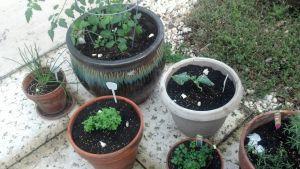 Tomato, Basil, Broccoli, Parsley