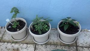 Oregano, Sage, Jalepeno