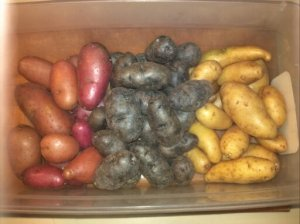 Red, Purple and White Potatoes